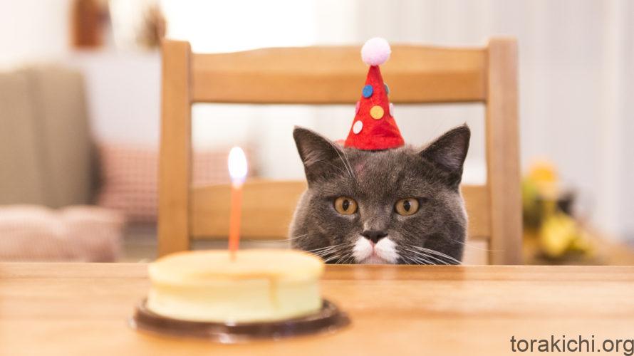 猫の平均寿命は?年齢に応じたケアをしよう!