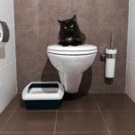 猫用システムトイレが便利!そのメリット・デメリットを紹介