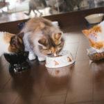 猫の体を考えたキャットフードの選び方