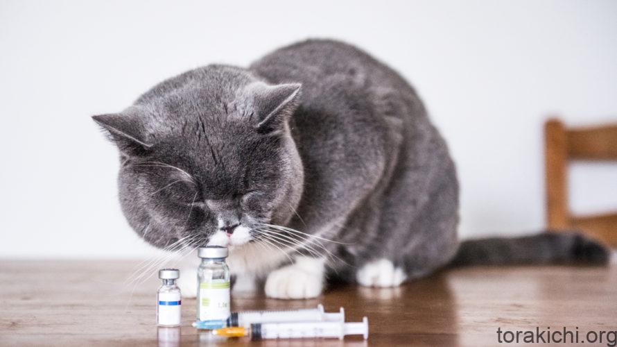 猫は腎臓病になりやすい!?愛猫の寿命を延ばす為にできること