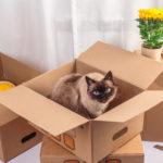 猫と一緒に引っ越し!愛猫に負担を与えない為にできることは?