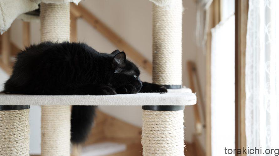 猫の爪とぎの大切さ。おすすめのキャットタワーも紹介