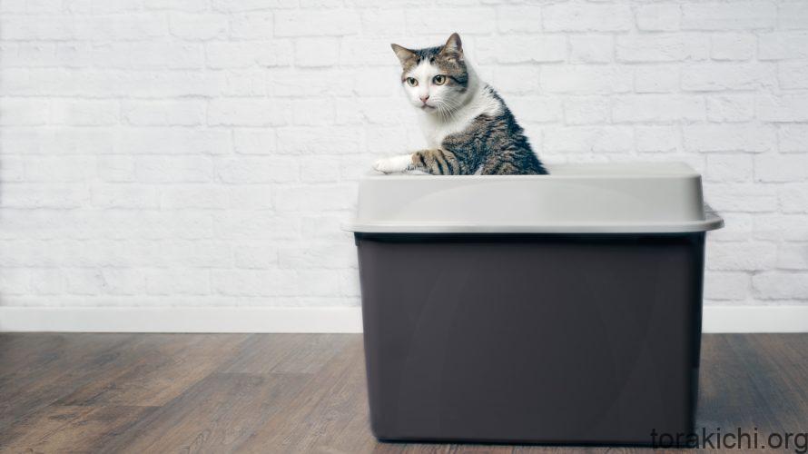 猫の全自動トイレの基本知識!メリットとデメリットも紹介