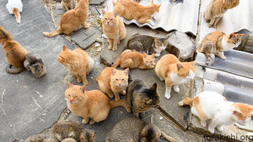 多頭飼いの秘訣とは?猫同士の相性・年齢差が大切