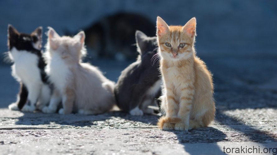 雑種猫の種類と性格傾向。あなたの愛猫はどんな子?