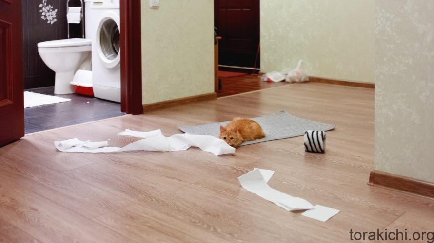 飼い猫用安全ガイド。家の中だって油断は禁物!
