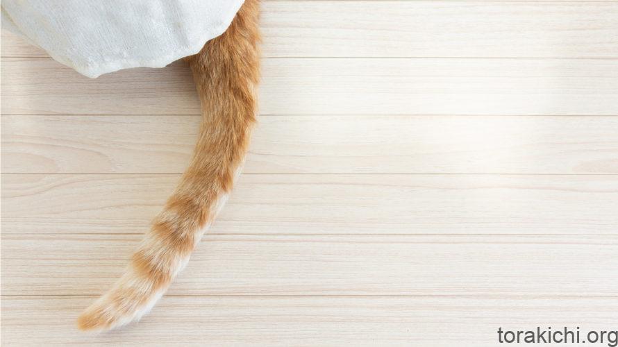 猫のしっぽによる感情表現。振り方で気持ちを読み取ろう