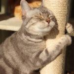 猫を飼う時の必需品?あると便利な猫グッズ紹介